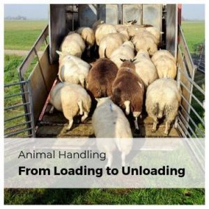 Animal Handling from Loading to Unloading