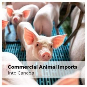 Commercial Animal Imports into Canada