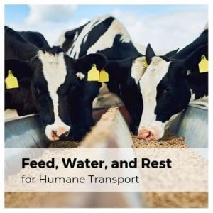 Feed Water and Rest for Humane Transport