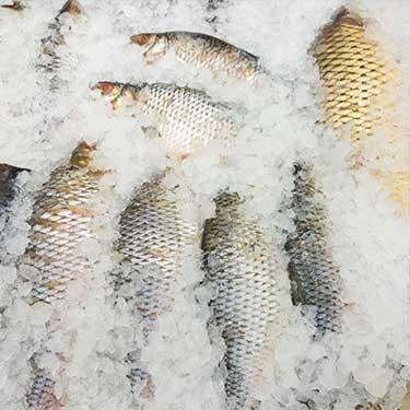 blaine-washington-cross-border-freight-fish